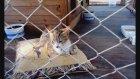 Kedi Evinin Minik Misafirleri Antalya 2017
