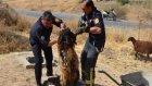 Adiyaman'da 38 Koyunun Daracık Kuyuya Düşmesi