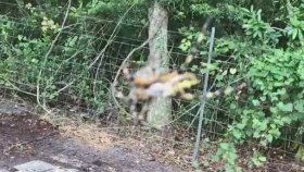 Örümceğin Kurbağayı Ağına Sarması