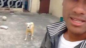 Genç Adamın Kaldırımda Otururken Sırtına Çişini Yapan Köpeği Sahiplenmesi