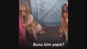 Arkadaşını Satan İspiyoncu Köpek