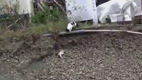 Çukura Düşen Yavru Köpeği Kedi Kurtardı