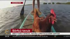 Sörf Yapan Tavuk