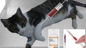 Kediciğimiz Ponçiği Hastaneye yatırdık.Parazitler istila etmiş.Doktor Hastaneye yatırdı