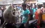 Trafikte Motorcu Rehin Alan Maymun  Hindistan