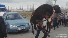 Azeri Pehlivandan Enteresan Güç Gösterisi