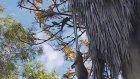 Palmiye Ağacında Sıçan Avlayan Piton