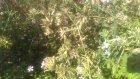 Kedi otunun bitkisinin çayının faydaları yararları nelerdir