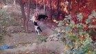CATS kediler 2017 KOMİK VİDEOLAR turkey