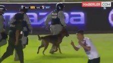Polis Köpeği, Topu Kaptığı Gibi Saha İçinde Dolaştırdı