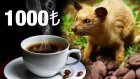 Dunyanın En Pahalı Kahvesini İçtik (Kilosu 1000 TL)