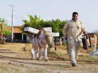 Brezilya'lı Adamın Eşeğe Arıcı Tulumu Giydirmesi
