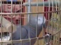 En Net Konuşan Papağan