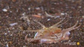 Deniz Dibinde Yaşayan Korkunçlu Yaratık - Bobbit Solucanı