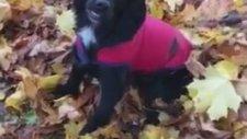 Dökülen Yapraklarda Eğlenen Köpek