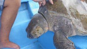 Deniz Kaplumbağasını Kurtaran Yüreği Güzel İnsanlar