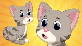 Kedi Kedicik Çocuk Şarkısı
