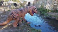 T-Rex Kostümüyle Timsaha Meydan Okuyan Çılgın Adam
