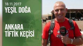 Yeşil Doğa, Ankara Tiftik Keçisini Ekrana Taşıdı - 18.11.2017 Cumartesi