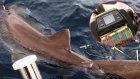 Antalya'da Oltayla 326 Kiloluk Köpek Balığı Yakaladı