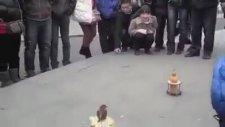 Bozuk Paralara Toplayıp Kumbaraya Atan Kuş