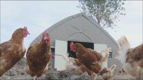 Çadır'da Tavuk Kümesi Kullananlar Memnun Detaylı Bilgi İçin