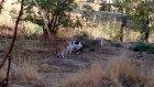 Kedilerin Amansız Kavgası # Elazığ Türkiye İlginç Videolar