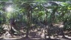 Amazon 360 Vr, Kingdom Of Forests