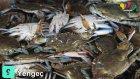 Dünyanın En İyi 10 Balık Avlama Yemi
