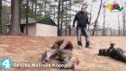 En Yaramaz 10 Köpek Cinsi