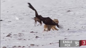 Hayvanlar Aleminin En Efsane Dövüşleri