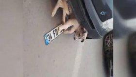 Tampona Sıkışan Köpek