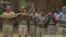 İnsanların Görmeden İnanmadığı 7 Büyük Hayvan