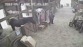 Bakımı Yapıldığı Sırada Huysuzlanan Atın Beklenmedik Tepkisi