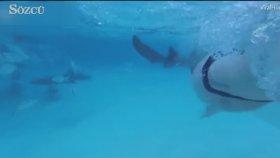 Balayında Karısına Saldıran Köpekbalığını Videoya Çekti