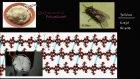 Hidroliz (Fen Bilimleri) (Biyoloji)