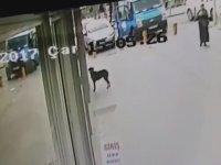 Kocaeli'de Sevimli Köpeğin Patisiyle Cama Vurup Yemek İstemesi
