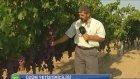 Tarım Bilgisi   Üzüm Yetiştiriciliği