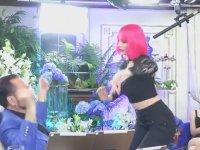 Pembe Saçlı Kedicik Dansı
