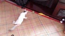 Felçli Kedinin Topla Oynaması
