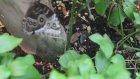 Kelebek üretimi Nasıl Yapılmakta Kelebek Vadisi Kelebek Bahçesi Tropikal Canlılar Aykut öğretmen