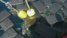 Deniz Kaplumbağası 53 Milyon Dolarlık Kokain İle Yakalandı