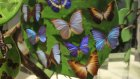 Kelebek Vadisi 5 Kelebek Bahçesi Tropikal Canlılar Hakkında Bilgi Video Aykut ilter öğretmen