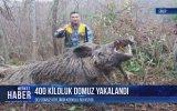 Sinop'ta 400 Kiloluk Domuz Avlayan Avcı