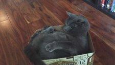 Kendi Kuyruğunu Isıran Psikopat Kedi