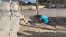 Sokak Köpeğine Arabeskli Serenat Yapan Temizlik İşçisi
