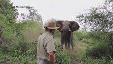 Cesur Safari Rehberini Görünce Frenleyen Fil