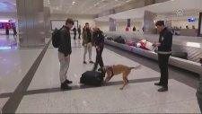 Atatürk Havalimanı'nda Hollandalı Yolculara Köpekli Arama
