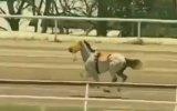 Jokeyi Üzerinden Atan Yarış Atının Metrelerce Uçması
