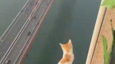 Zirvede Bile Asaletini Koruyan Kedi